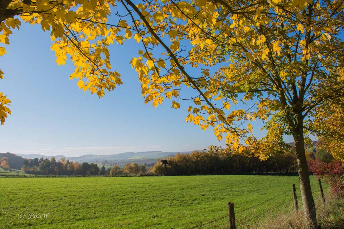 Herbst und Rotweinwanderweg