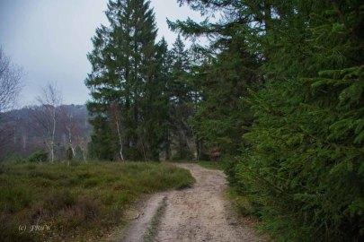 Sellhorn_Totengrund (45)
