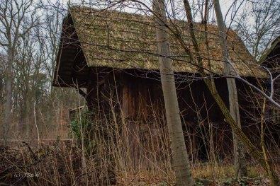 Wacholderwald (126)