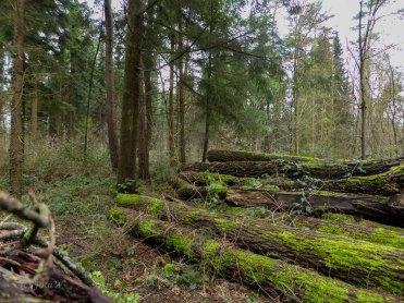 Wildpark_HoehenfelderSee_DellbrueckerHeide (31)