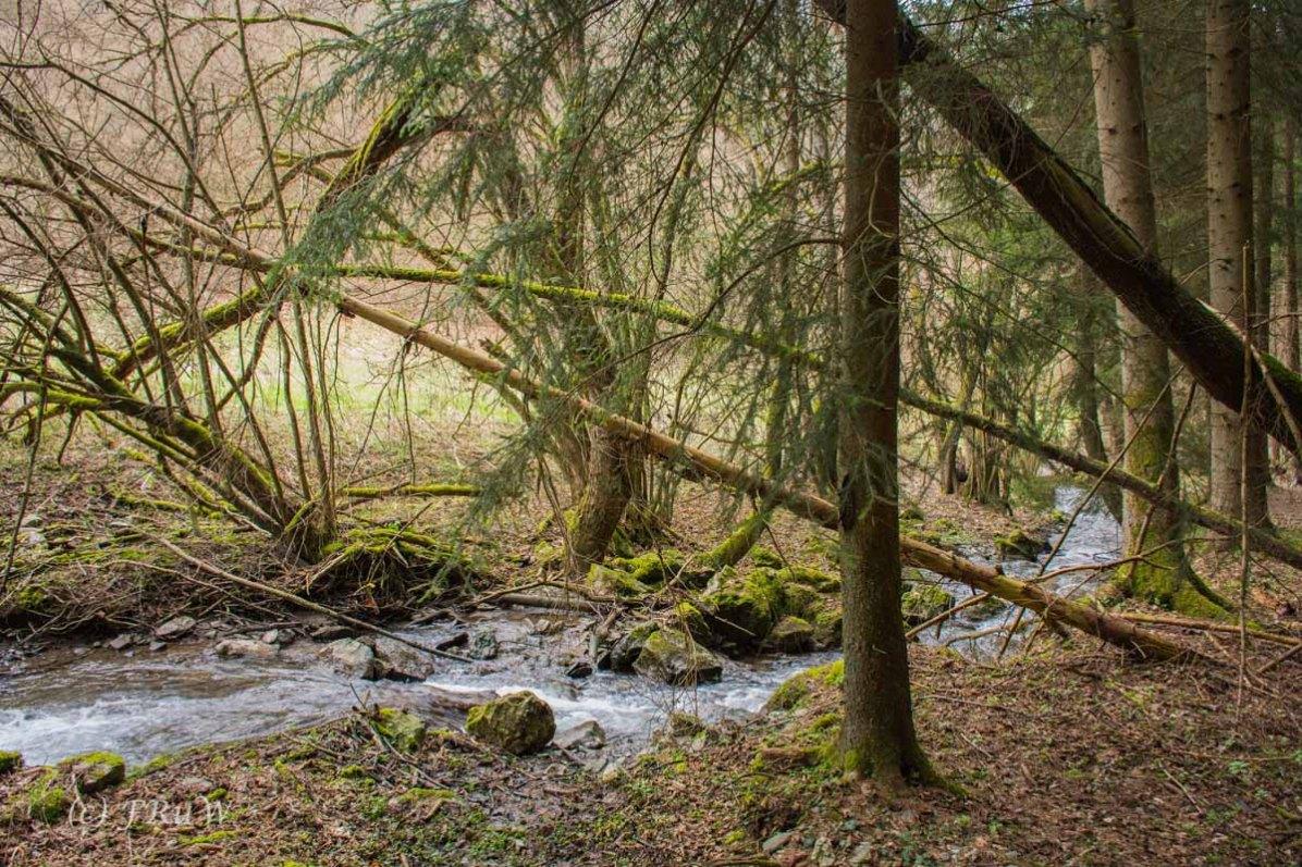 Traumschleife_Altlayer Schweiz (73)