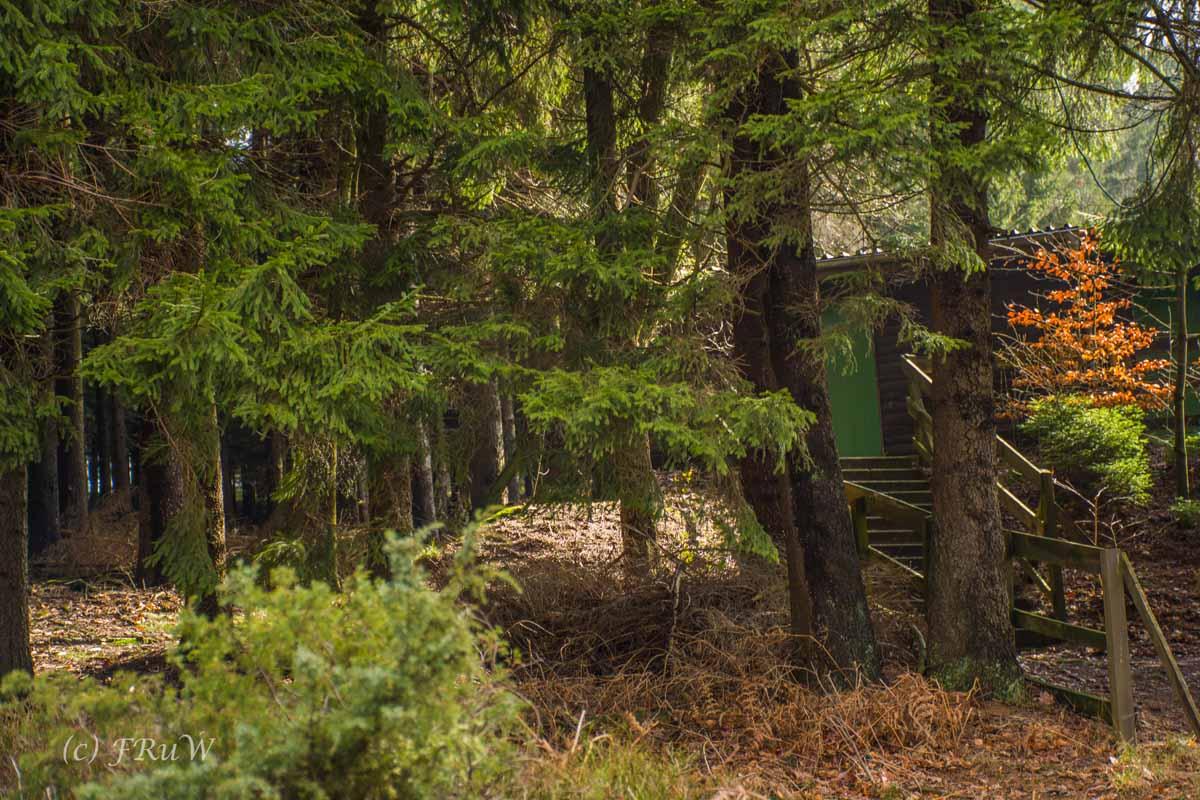 Wildenburger Land (15)