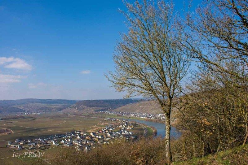 Trittenheim  (47)