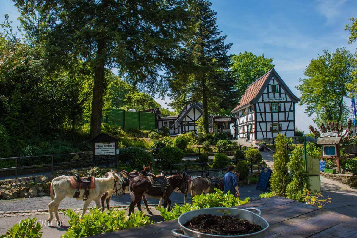 Drachenburg (204)