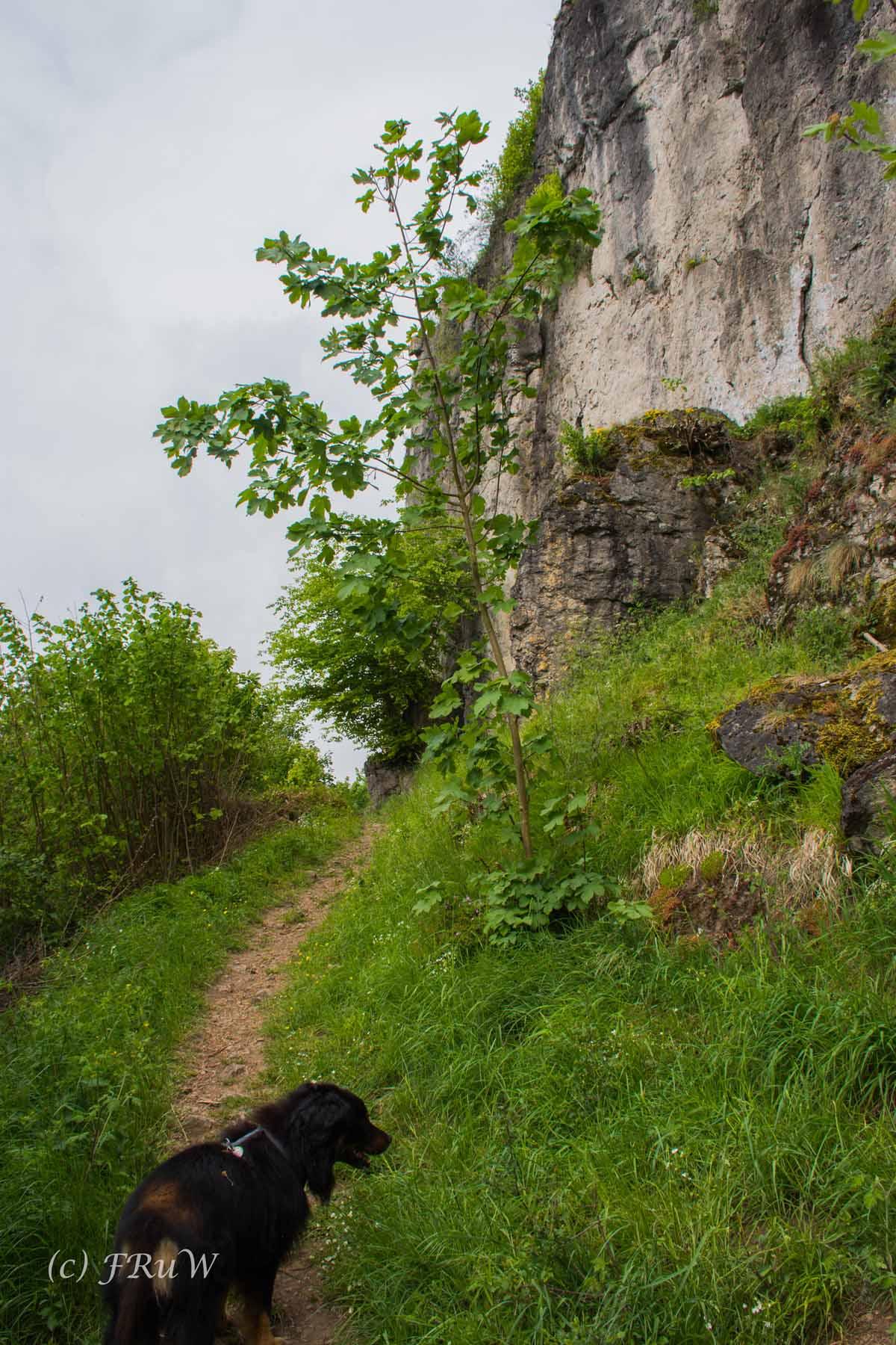 Gerolsteiner Felsenweg (23)