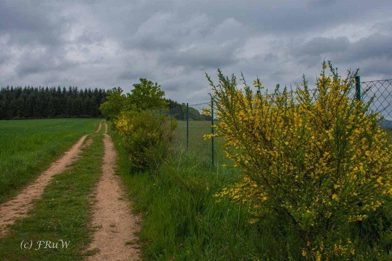 Gerolsteiner Felsenweg (55)