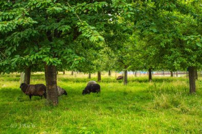 Kloster Knechtsteden_und_Tierpark_0449