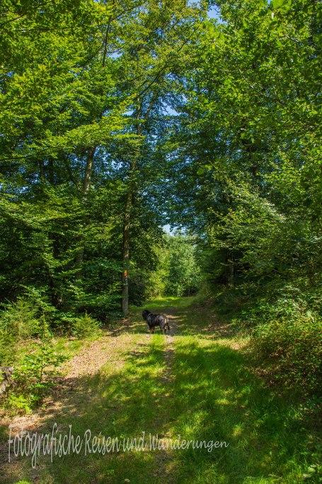 BergischerStreifzugBaumweg (132)