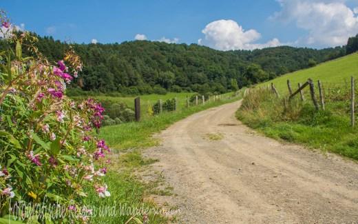 Wandern auf dem Bergischen Streifzug Baumweg