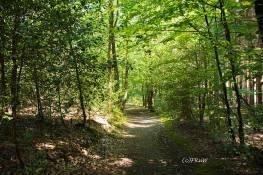 BergischerStreifzugBergbauweg-(107)
