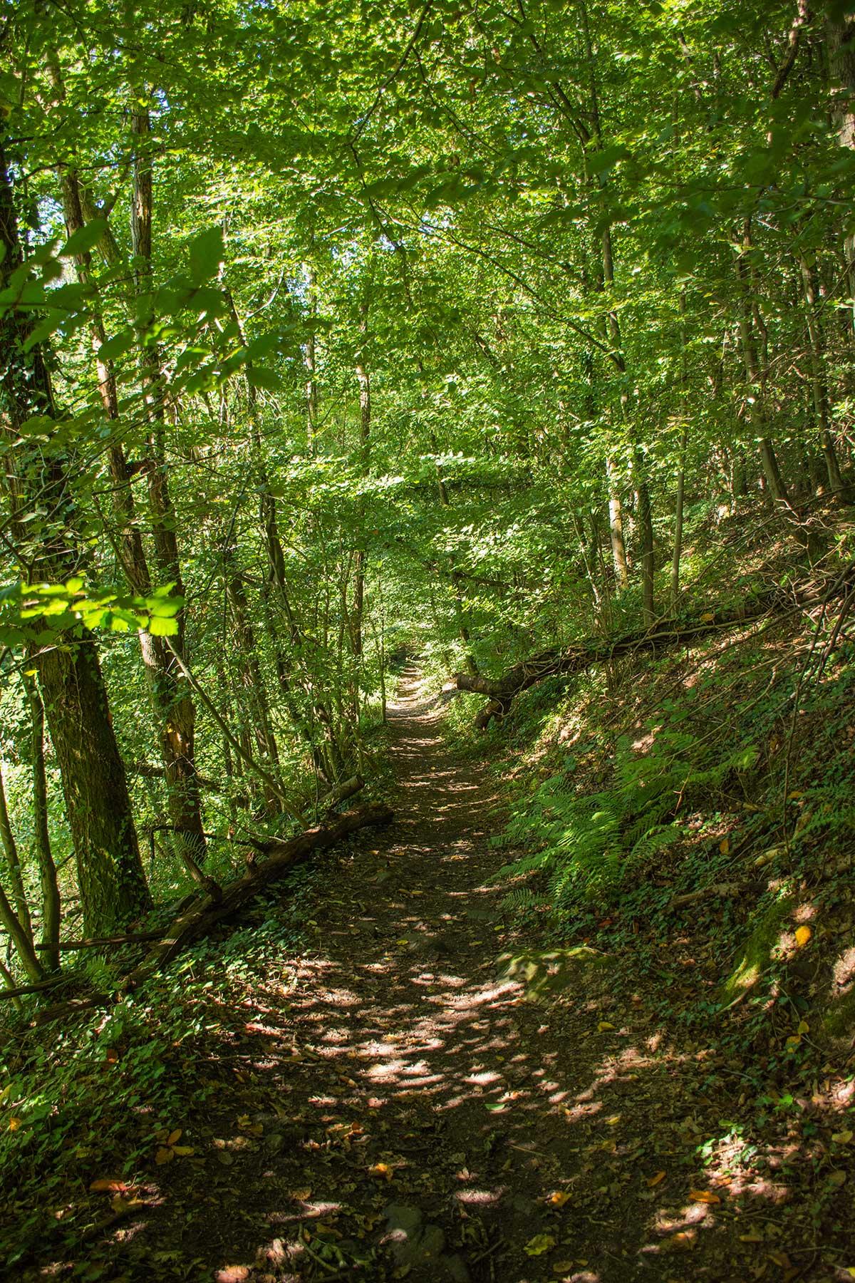 BergischerStreifzugBergbauweg-(39)