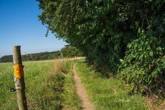 BergischerStreifzugBergbauweg-(72)