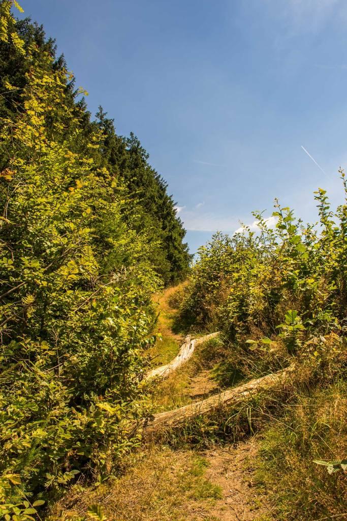 BergischerStreifzugFuhrmannsweg-(25)
