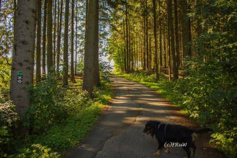 BergischerStreifzugFuhrmannsweg-(320)