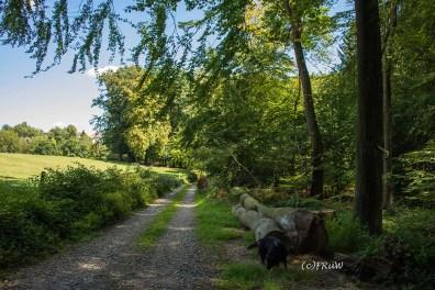 Bergischer_Streifzug_Pilgerweg (184)