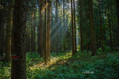 fuchskaute_erlebnisschleife_westerwald-41