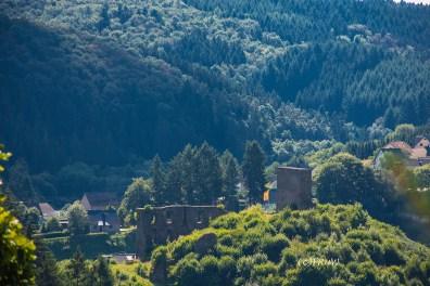 wacholder_ginster_-pilgerpfade-bei-st_-jost-136