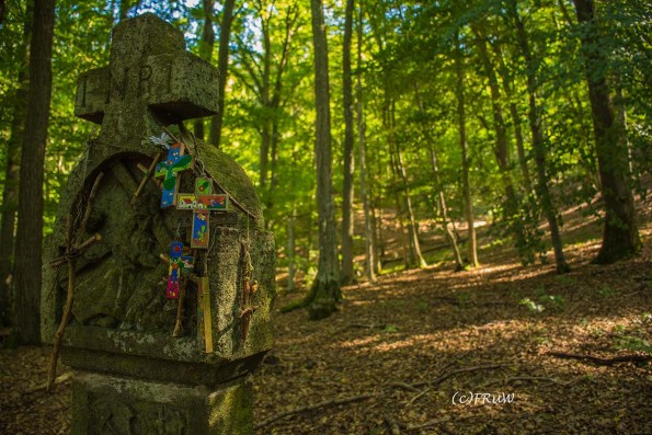 wacholder_ginster_-pilgerpfade-bei-st_-jost-36
