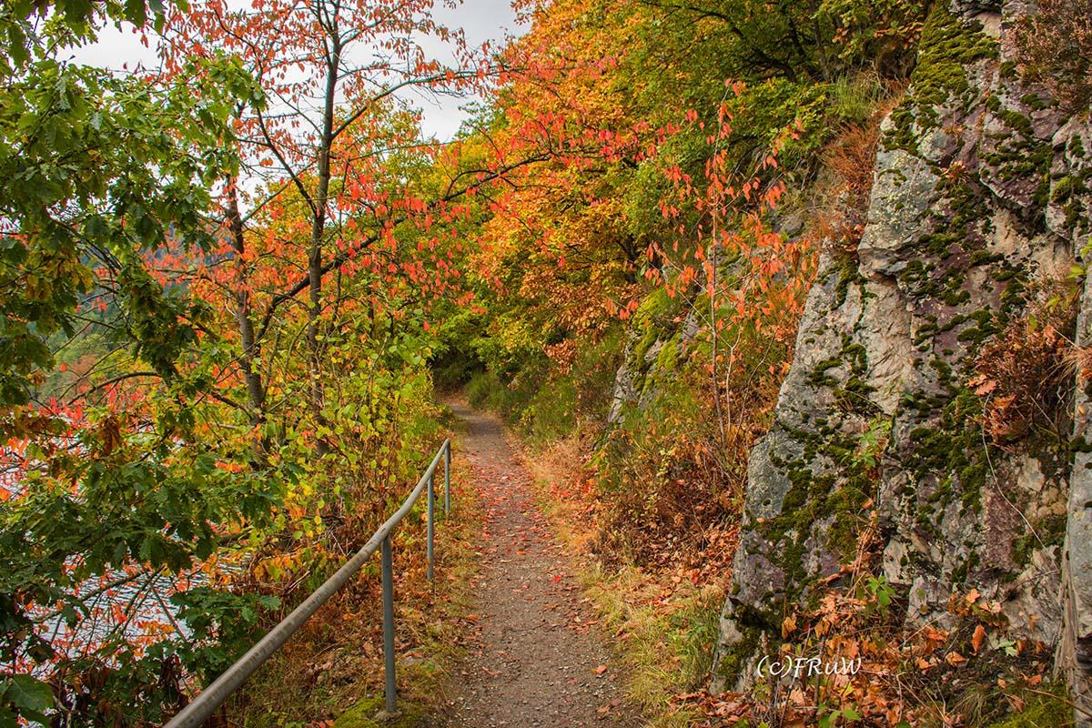 Wasserland-Route am Rursee - Herbstliche Farben am Fels