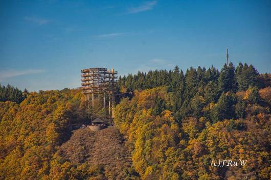 Gut sichtbar der Turm des Baumwipfelpades