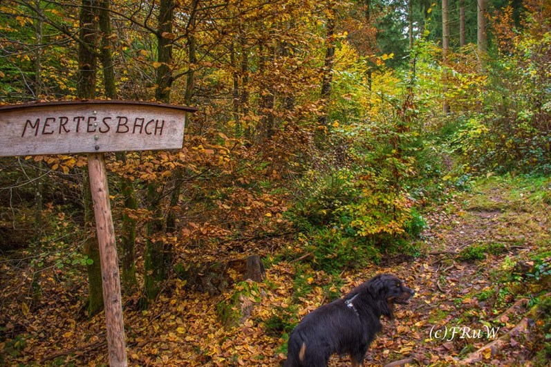 ruwerhochwaldschleife-122
