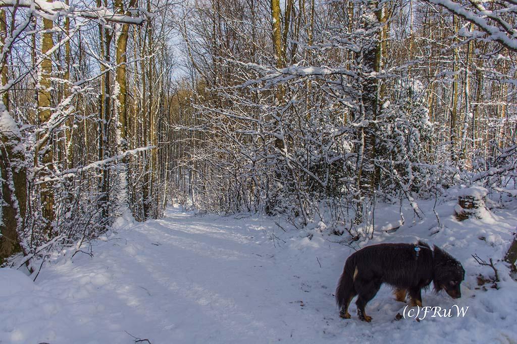 Es ist still auf dem Klangpfad - Nur der Schnee knirscht unter meinen Füßen