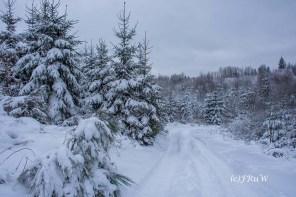 bergischerstreifzugwacholderweg-49