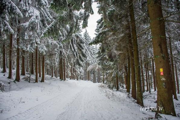 bergischerstreifzugwacholderweg-73