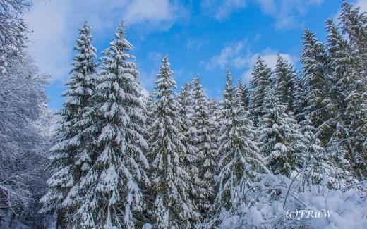 Schneewandern an der Oleftalsperre