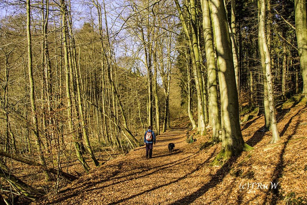 dunntalsperrewanderweg-73-von-109