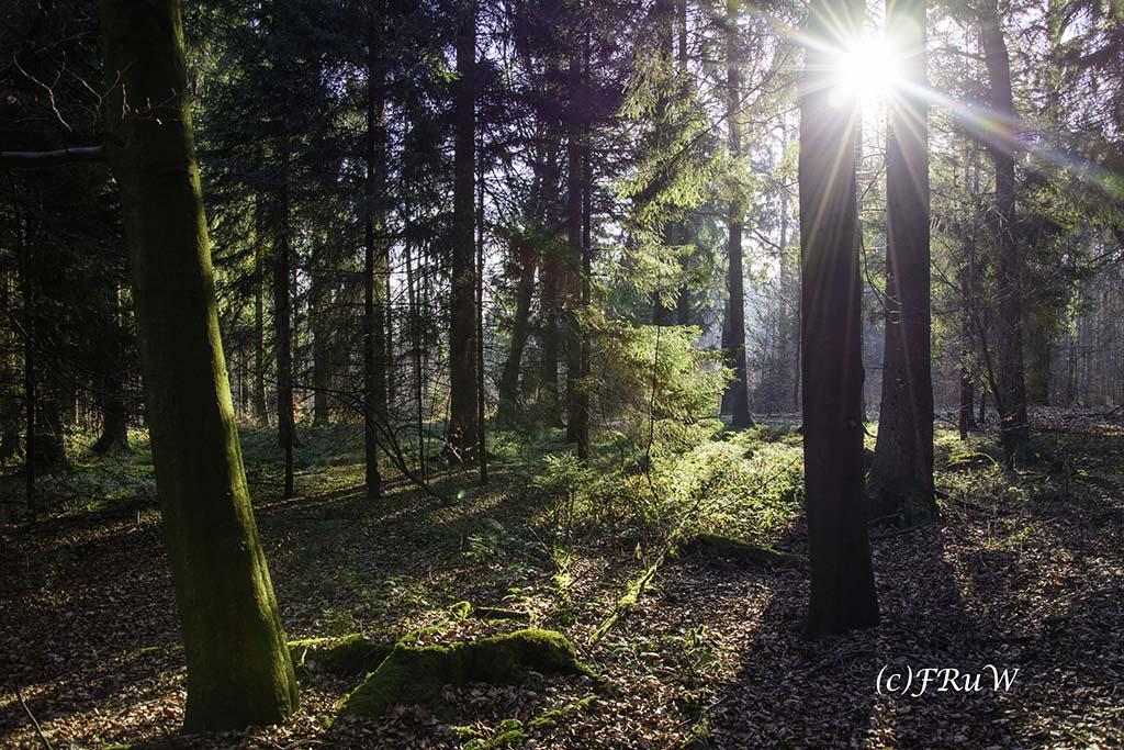dunntalsperrewanderweg-9-von-109