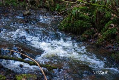 Viel Wasser im Elbbach