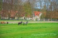 Runde_Allrode (98)-Bearbeitet