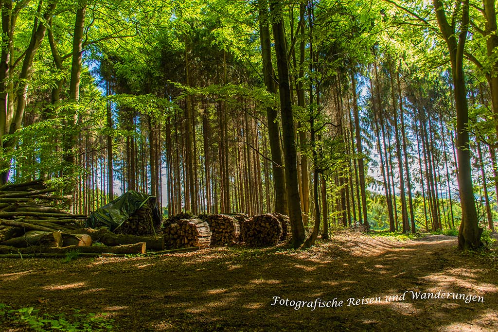 Rundweg-Klasmühle (22)