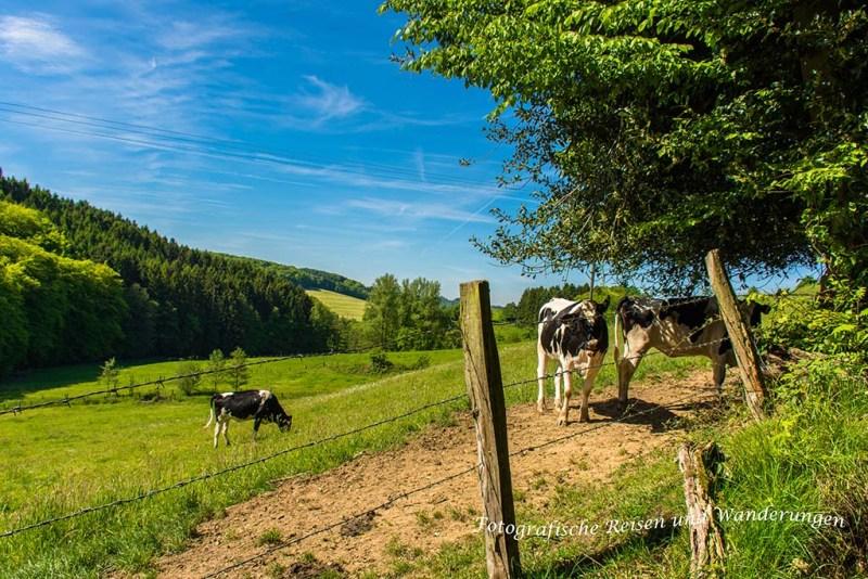 Rundweg-Klasmühle (61)