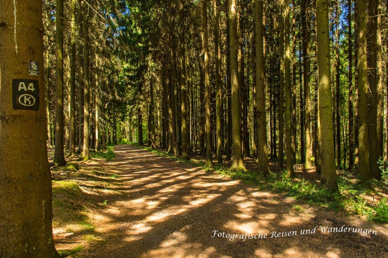 Wunderschöner Wald
