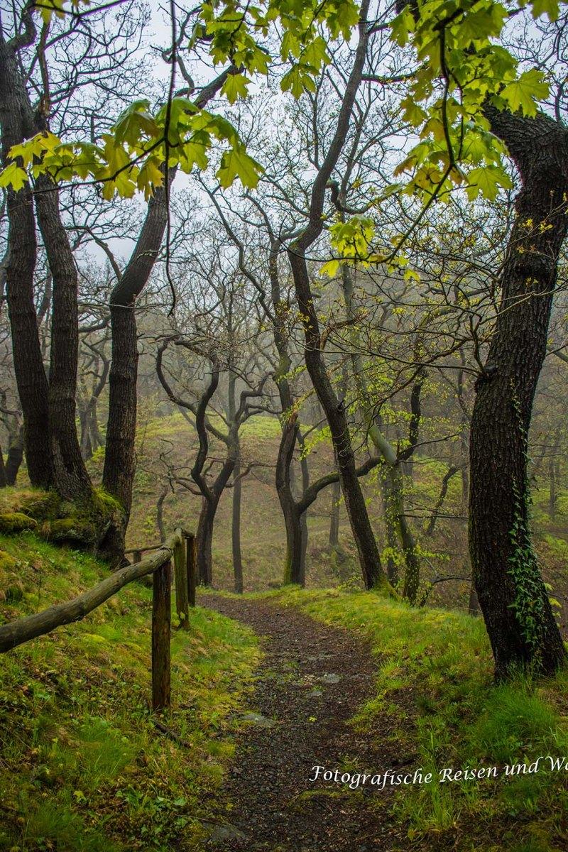 VonStecklenberginsWurmbachtal (97) Harz im Regen