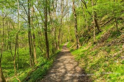 Lichtgrüne Frühjahrsstimmung im Bodetal