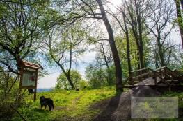 Holzbrücke an der Burgruine Anhalt