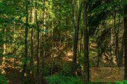 Sechs-Eichenrunde-Raßberg (21)