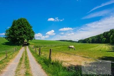 Tippeltour_Thier-nach-Wipperfürth (146)