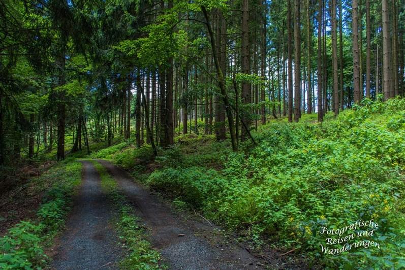 Hörlepanoramaweg (101)