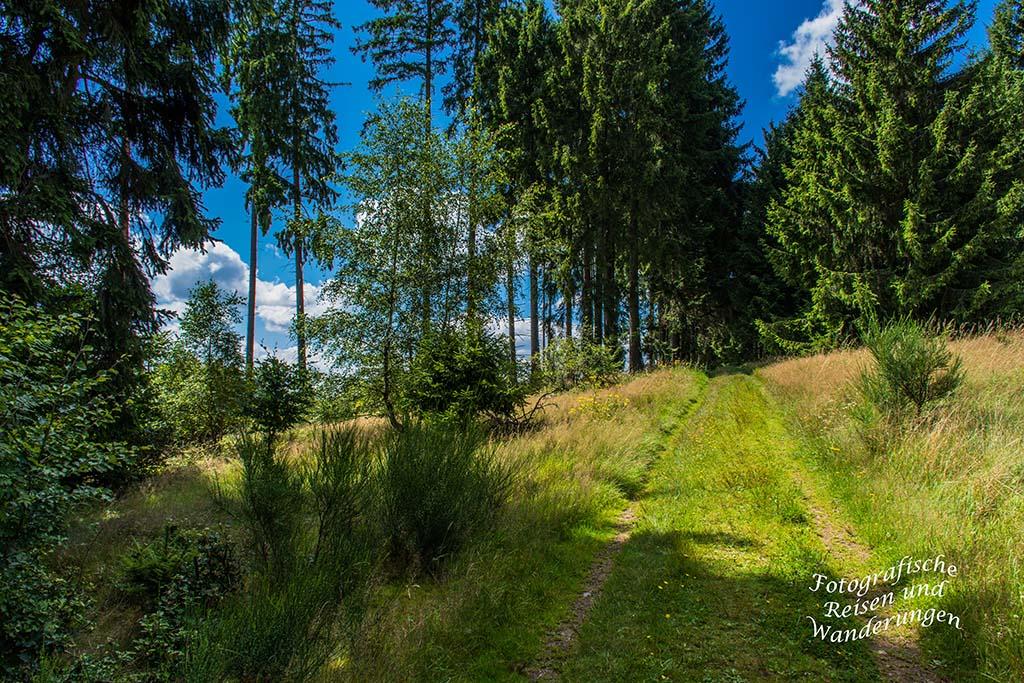 Hörlepanoramaweg (119)