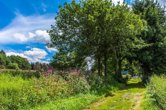 Oberbergischer Lutherweg (131)