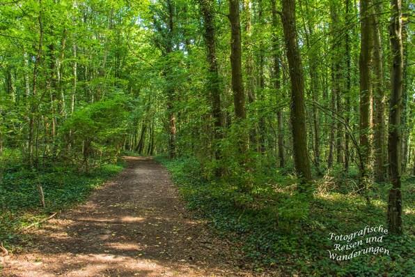 Waldweg oberhalb Wijlre