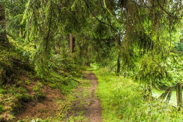 Weiche Waldpfade in der Wisentwildnis
