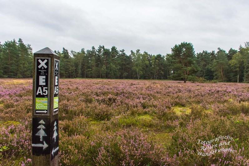 Senne - Heide