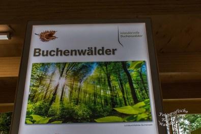 LandesgartenschauBadLippspringe (126)