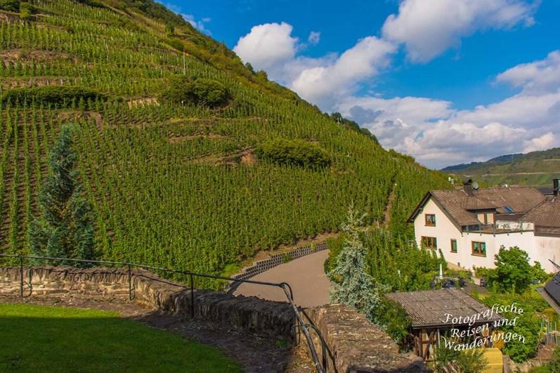 Blick in die Weinberge von St. Aldegund