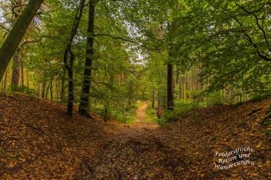 Traumhafte Wege durch den Mischwald bei Arcen
